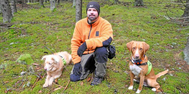 Rekordintresse för barkborrehundar