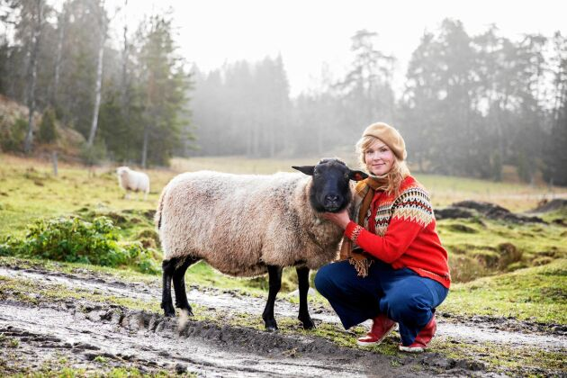 Ledarfåret Karmen gillar att gosa och bli kliad bakom örat. Sofia och hennes sambo har sin fårflock på långtidslån från bonden.
