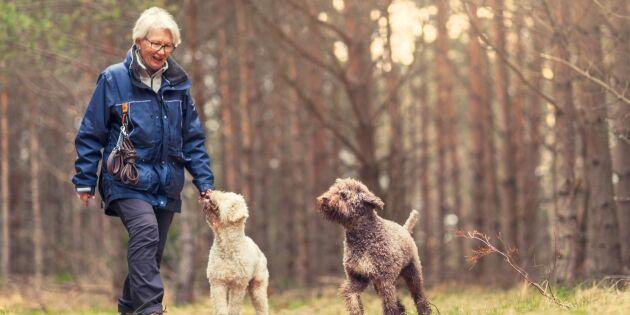 11 bevisade hälsoeffekter av promenader!