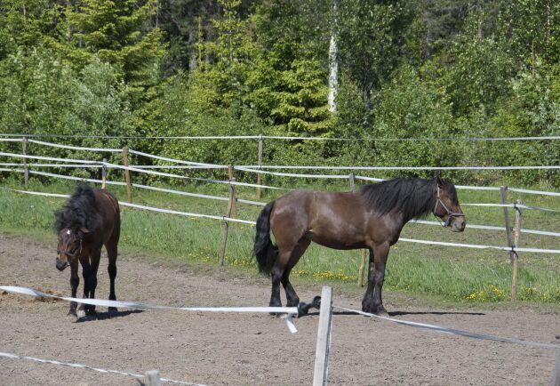 Anläggningen har plats för drygt 30 hästar. Unghästarna går på lösdrift och rehabhästarna står på box.