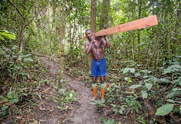I stället för att släpa den stora stocken till sågverket kan man såga med mobilt sågverk och bära ut regel för regel.