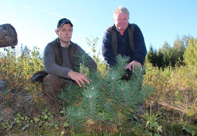 Martin Jeppsson, viltförvaltare Holmen Skog, och Bo Söderberg, ansvarig för övervakningskamerorna.