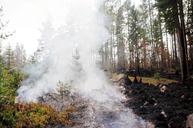 Pyrande rök vid skogsbrand i Ljusdals kommun, i närheten av Ängra och Huskölen.