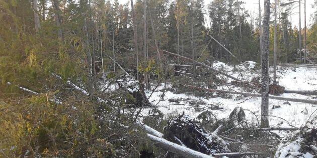 Skogsägare riskerar böter efter stormen Alfrida