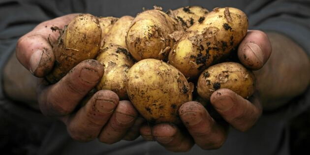 Hälsoboosta potatisen: 3 enkla metoder