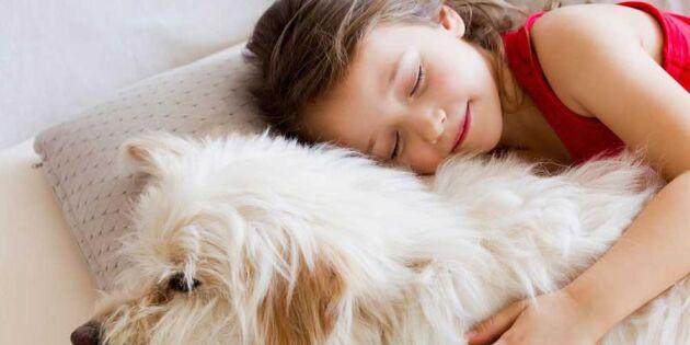 Nu är det bevisat: Vi mår bra av att sova med hunden i sängen