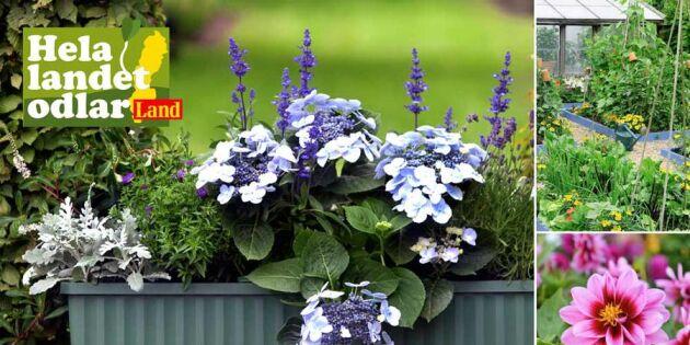 Odla med Land i år – visa upp din vackra trädgård!