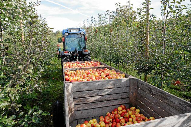 Svenska livsmedel har, jämfört med livsmedel från andra länder, små eller inga rester av kemiska växtskyddsmedel.