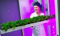 Ikea skördar sin första sallat