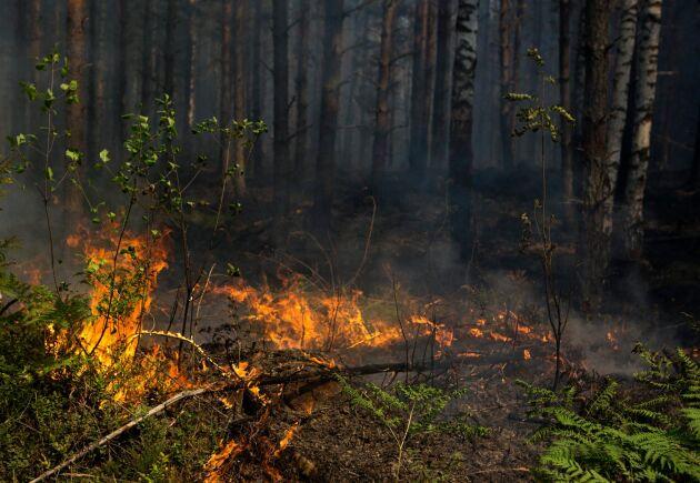 Markberedning startade den stora skogsbranden i Västmanland 2014. Nu har entreprenören dömts till 2,5 miljoner kronor i böter.