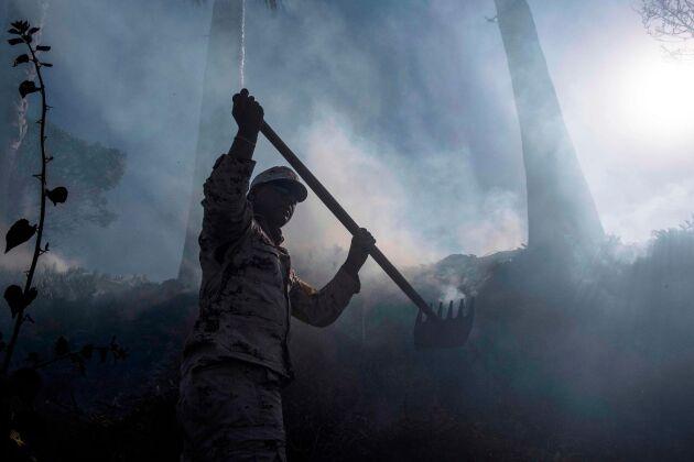 Skogsbränder bekämpas i närheten av Tijuana.
