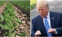 Kina slutar köpa jordbruksprodukter från USA