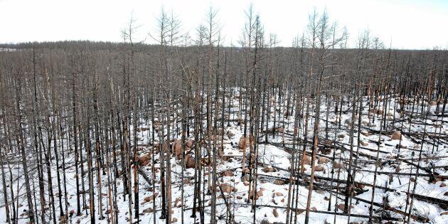 Skogsnäringen vill ta större ansvar för bränder