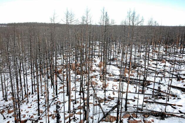 Skogsnäringen är beredd att åtar sig att stå för de kostnader som berör dem i förslagen som skogsbrandutredningen kommer fram till.