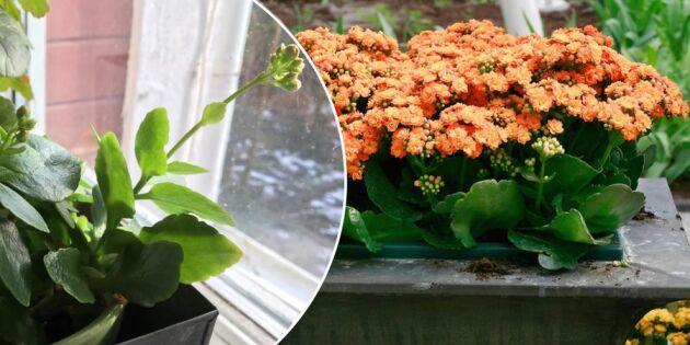 Se upp! Köpta krukväxter kan förstöra komposten