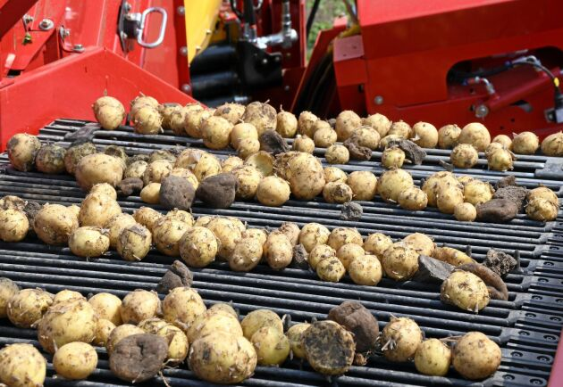 Resultatet är förbluffande med nära nog bara potatis på bandet.