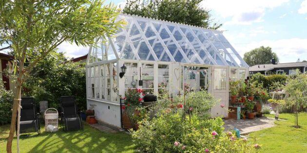 Inga-Lill och Jan byggde drömväxthuset av återbrukat material – kika in i deras vackra oas!