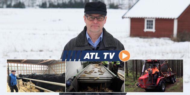 ATL TV: Högt kilopris för japansk köttras