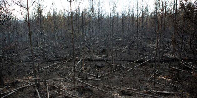 Entreprenören fälls för Västmanlandsbranden
