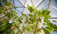 Kompromiss fattad kring ekoväxthusodlingen