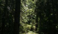 Sveaskog avyttrar skog utanför Stockholm