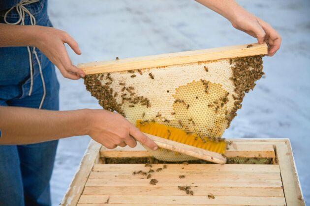 Under varje list i topplistkupan bygger bina efter eget tycke.