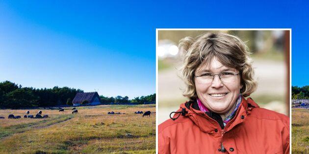 Gotlands succé – först med bredband till alla