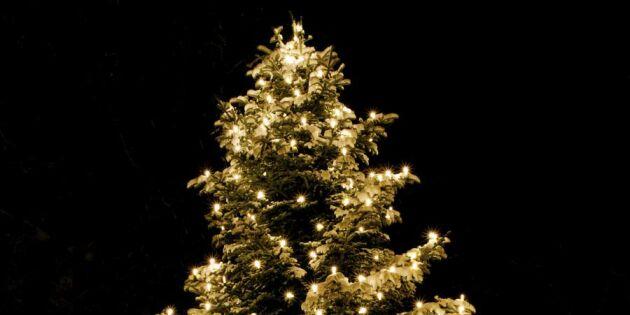 Kommun stal grann julgran