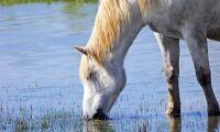 Hästar dog av förgiftat vatten