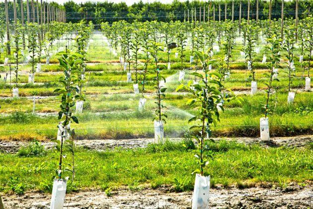 Plantera ett träd och må bra. Plantera flera och må bättre!