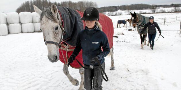 Hästnäringen behöver moderna skatteregler