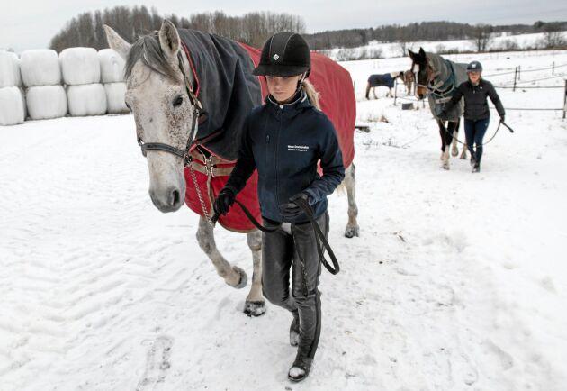 Hästen spelar en stor roll för både företagande inom de gröna näringarna och rekreation, skriver Per Åsling.