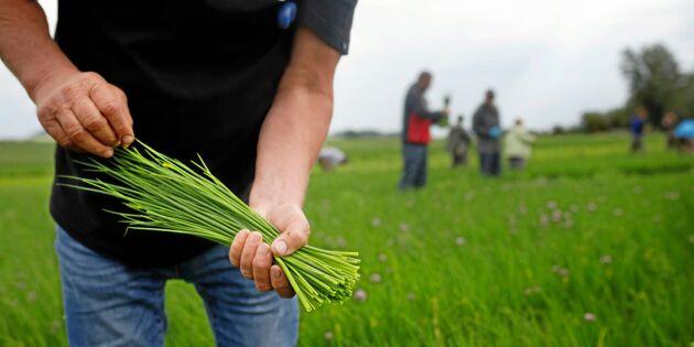 Hvilan snabbutbildar till gröna näringar i coronakrisen