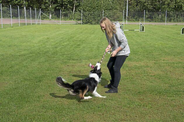 Tilde Larsen har fastnat för bordercollien och vallning. Sin praktik gjorde hon på en fårgård i Skottland med 35 vallhundar och 700 tackor. Tanken finns på att åka tillbaka och jobba där efter studenten.