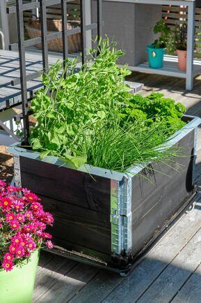 Färska kryddor är ett måste i medelhavsköket. Med hjul på odlingslådorna kan örterna lätt få så mycket sol de behöver för att smaken ska utvecklas.