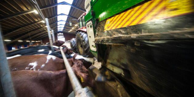 Platsbrist sätter spår i ladugårdarna