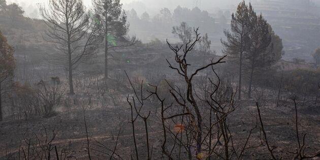 Stor skogsbrand rasar i Spanien