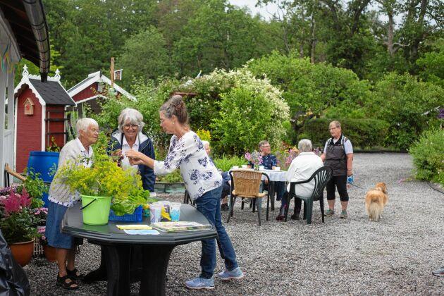 Till Kulbackens koloniområde i Västervik kom många besökare.