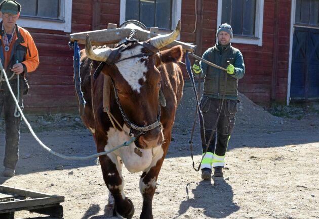 Yngve Henriksson övervakar deltagarnas försök att köra med Takstein.