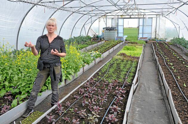 Lilla Labäck har specialiserat sig på ekologiska primörer och bladgrönt till toppkrogar. I växthuset frodas allt från italiensk agretti till cornichongurka och vattenspenat. Även om riskerna sprids med många grödor är ändå sparrisen enskilt den ekonomiskt mest betydelsefulla.