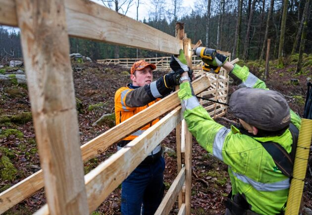 Montering. Tobias Andreasson och Håkan Johansson monterar trästängslet åt kunden, men det går också att sätta upp det själv.