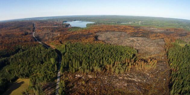 Skogsbrandsutredningen het potatis efter sommarens bränder