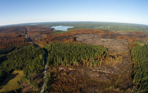 Brandfält efter den skogsbranden i Västmanland i augusti 2014.