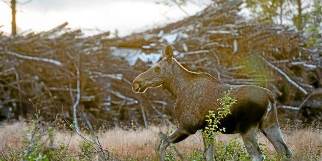 Skogsägare tvingas återbeskoga tusentals hektar gamla hyggen
