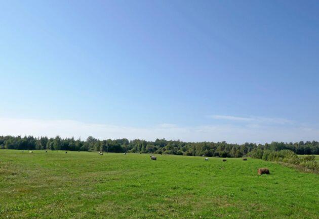 I sydöstra Lettland verkar det inte varit så hög efterfrågan på vårens höskörd, som i många fall låg kvar på fälten. Låg avsättning för jordbruksproduktionen har bidragit till en omställning till skog.