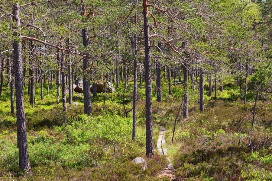 Land.se listar Sveriges tystaste platser