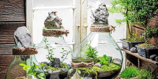 Mossterrarium: Plantera ett landskap i burk