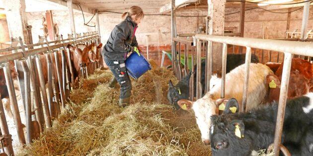 Spridda skurar för lantbrukets lönsamhet