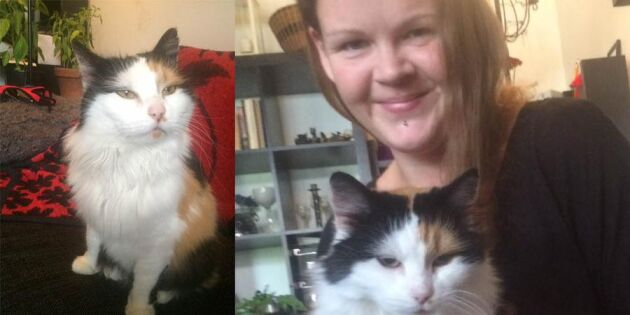 Här gömde sig Lillan –hemma med matte efter fyra år
