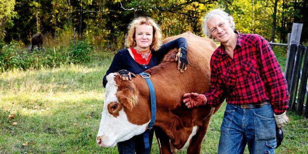 """Författarna Ann-Helen och Gunnar om nya boken: """"Korna är planetens bästa vän"""""""